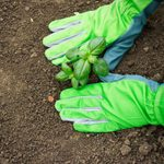 When is the Best Time to Start Growing a Garden?