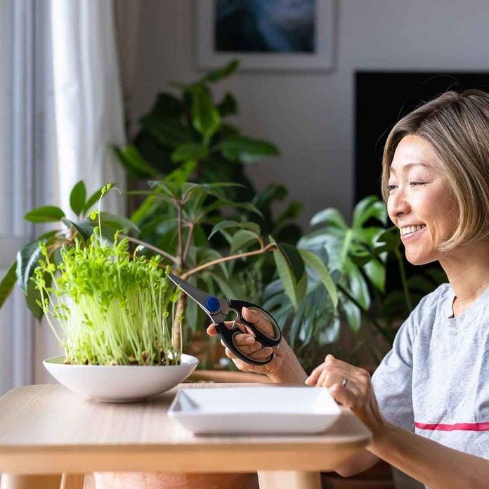 harvesting plants indoors