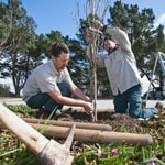 NALP Launches Climate Change Campaign for National Lawn Care Month