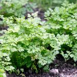 12 Herbs You Should Plant in Early Spring