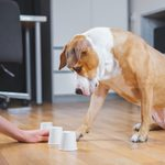 3 DIY Games You Can Play at Home With Your Dog