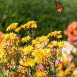 9 Tips for Sustainable Landscaping