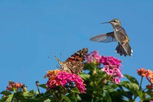 How to Make a Pollinator Friendly Garden