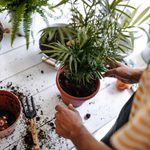 Best Potting Soil for Every Type of Plant