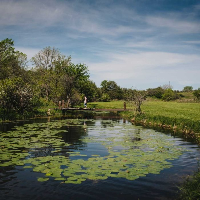 Weedy Pond