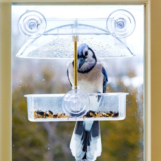 What You Need to Know About Window Bird Feeders