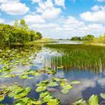 Pond Weed Identification: What to Know