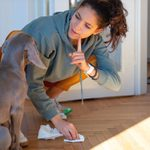 How To Get Dog Poop Out of Carpet, Wood & More