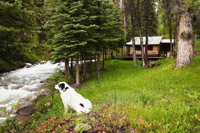 Dog At Cabin
