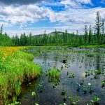 6 Best Products for Getting Rid of Lake Weeds Safely
