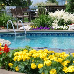 Best Landscaping Plants for Around a Pool