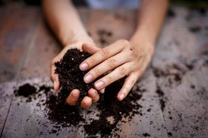 What's the Difference Between Potting Soil and Potting Mix?