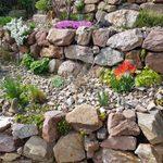 10 Best Plants for Rock Gardens