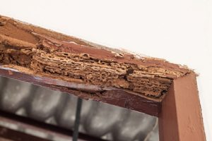 Can You Repair Termite Damage To Your Home?