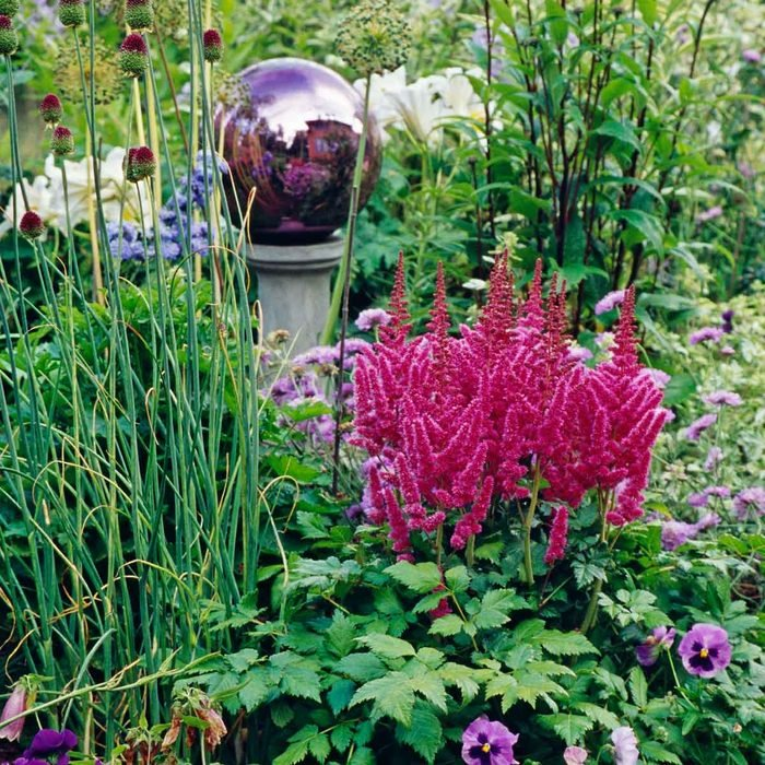Astilbe Flowers Gettyimages 87986167