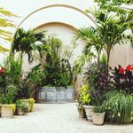 9 Best Trees To Grow in a Pot