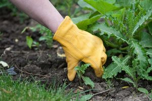 8 Common Mistakes People Make When Treating Weeds