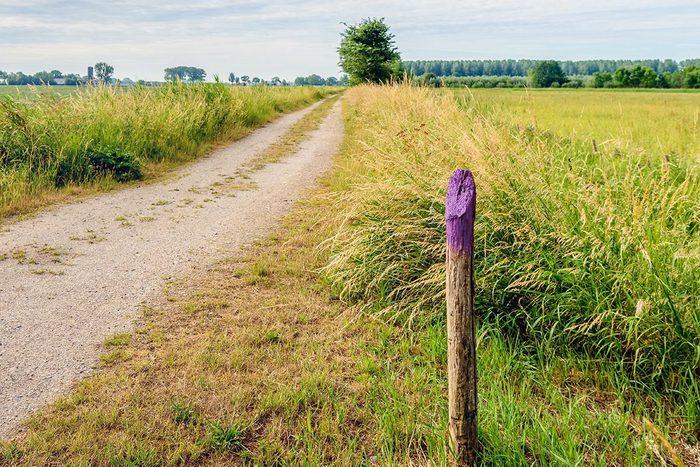 Purple Fence Post Qt 1200x800 Gettyimages 802770268