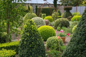 Homeowner's Guide To Shrubs