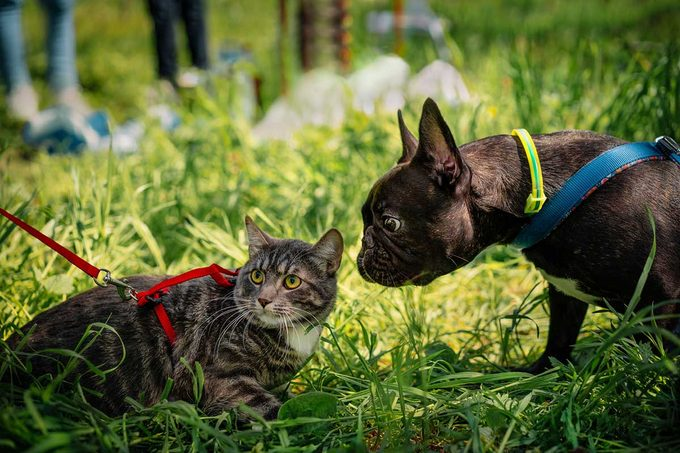 Walking A Cat And Dog