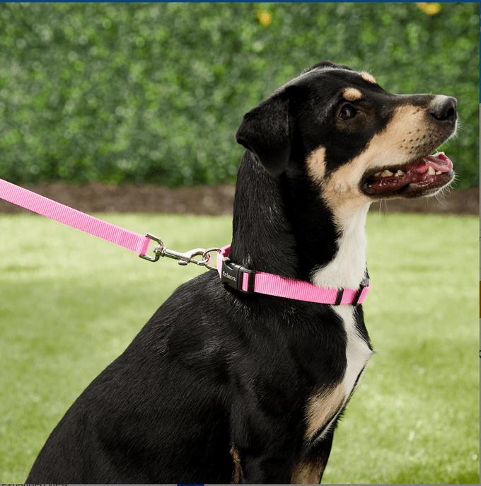 Chewy Frisco Solid Nylon Dog Leash