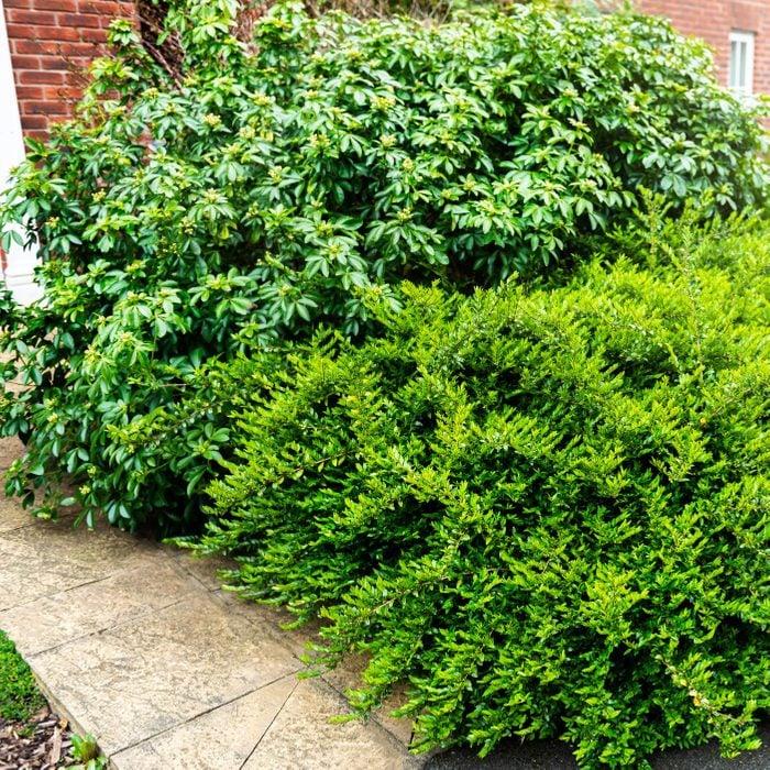 Overgrown bushes near the house
