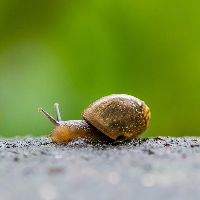 one garden snail crawling after each other on wet floor with green background