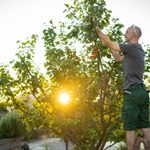 8 DIY Tree Care Tips