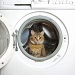 How To Get Cat Urine and Its Smell Out of Clothes