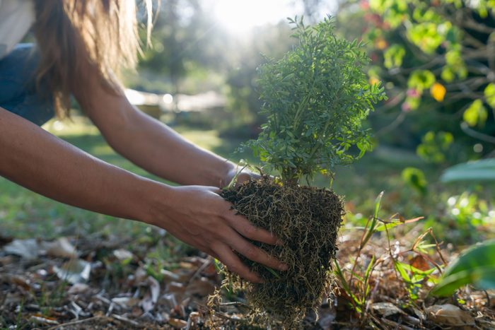 Close-up on a woman planting a tree