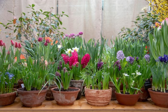 ceramic pots with bright flowers and planted bulbs arranged in a row