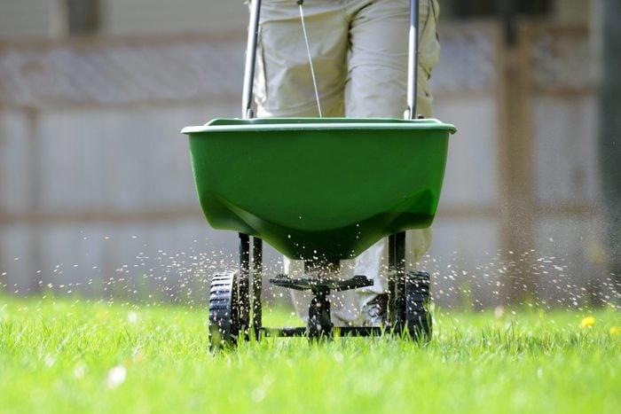 fertilizing the lawn before autumn