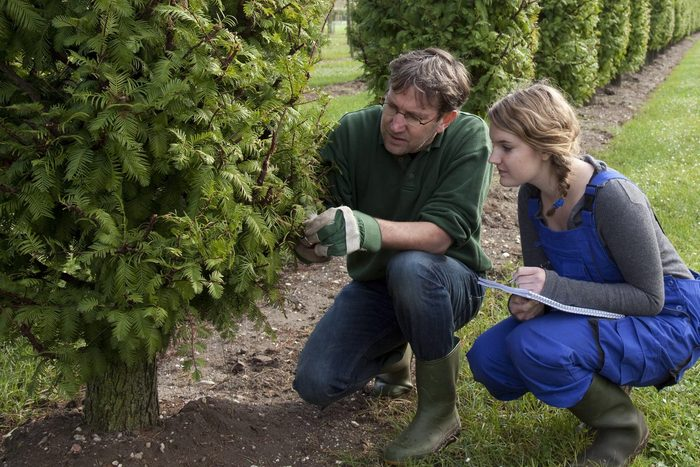 arborist inspecting trees