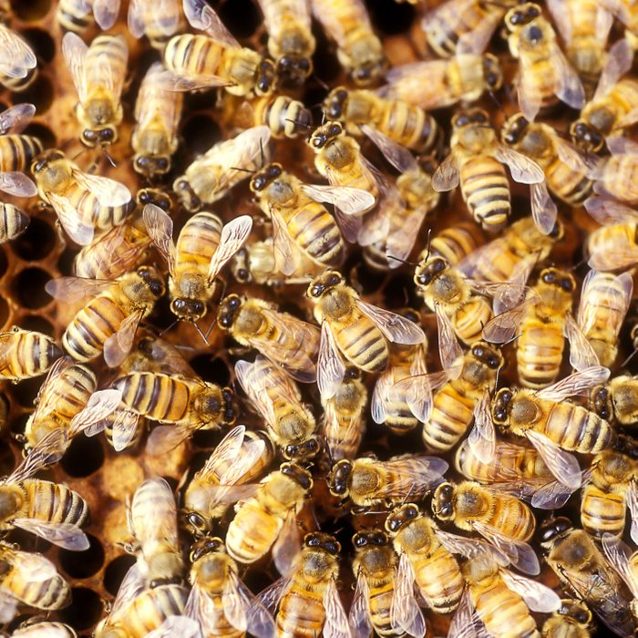 450,000 bees found in a Pennsylvania home