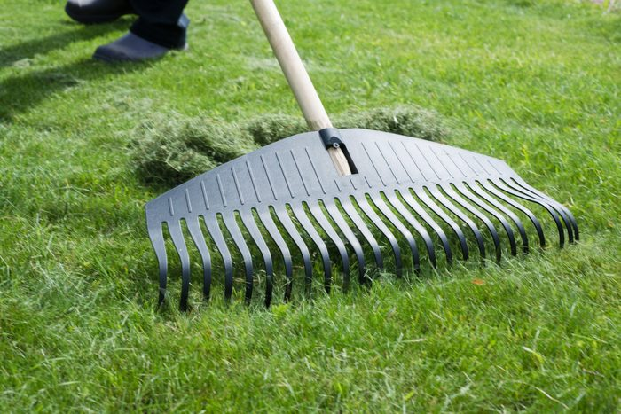 close up of raking the lawn during late summer