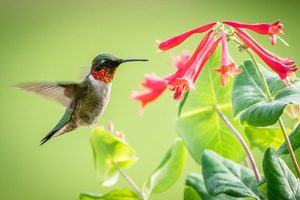 How to Attract Hummingbirds: 10 Expert Tips