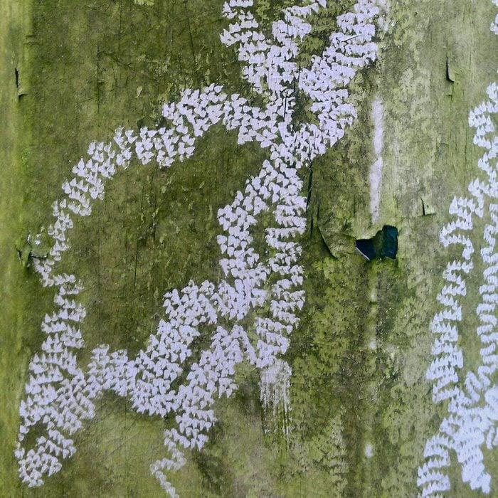 Land Snail Radula Tracks