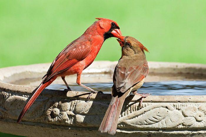 Birdbath Kerry Loving