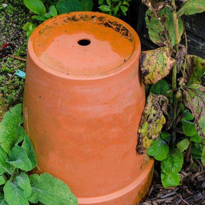 Flower Pot For Bees