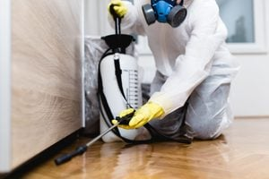 7 Things Your Cockroach Exterminator Wants You To Know