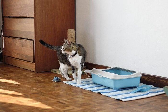 cat near litter box in bedroom