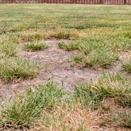 How Droughts Affect Lawn Care