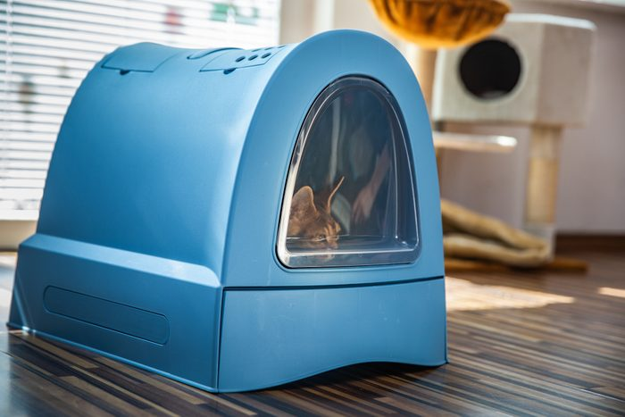 Domestic Cat Sitting in Closed Litter Box Indoors in Living Room