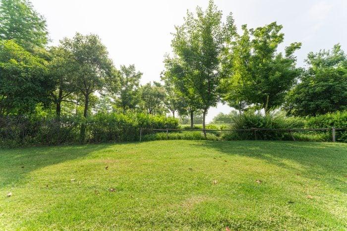 all natural back yard lawn