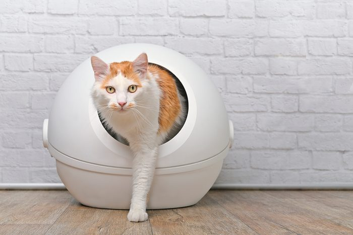 Cute tabby cat going out of a self-cleaning Litter box