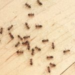 9 Things Your Ant Exterminator Wants You To Know