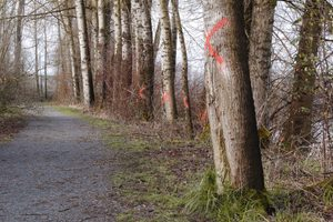 If You See Paint on Trees, This Is What It Means