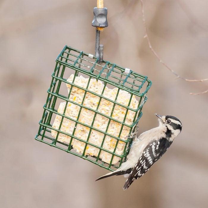 suet bird feeder