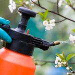 Lawn Sprayers: What To Know Before You Buy