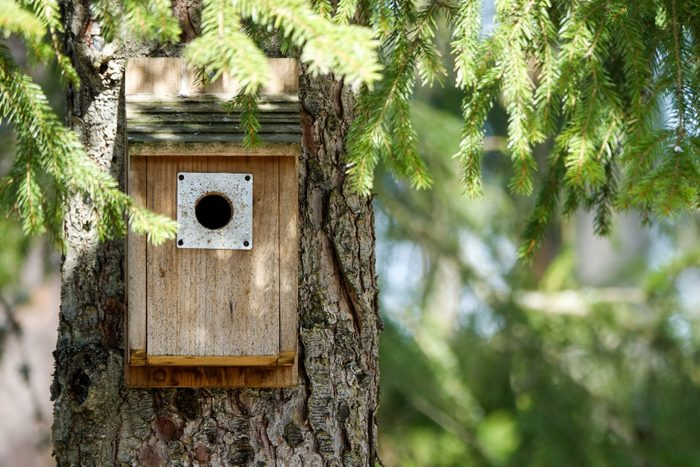 Bird house underneath branches in a tree